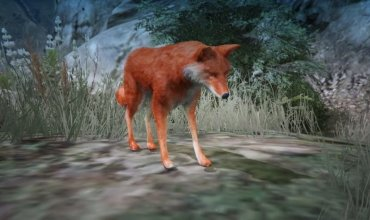 Wild Fox, скин дикой Лисы