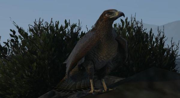 Птицы: Ястреб в GTA 5