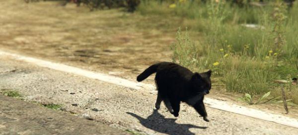 Коты в GTA 5