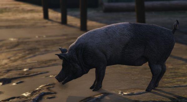 Свиньи в GTA 5
