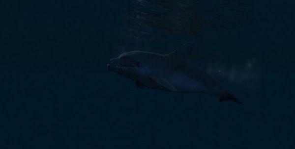 Дельфины в GTA 5
