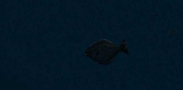 Рыбы в GTA 5