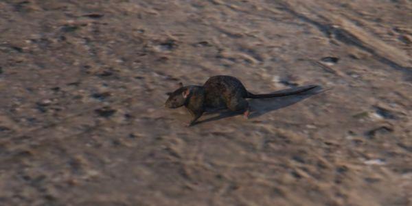 Крысы в GTA 5