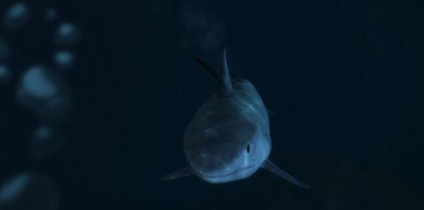 Акулы в GTA 5