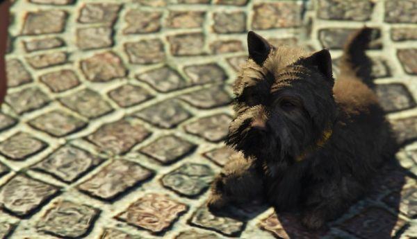 Собака: Шотландский терьер в GTA 5