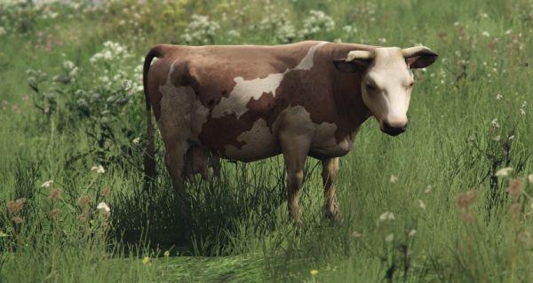 Коровы в GTA 5