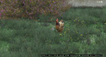 Курица GTA 5