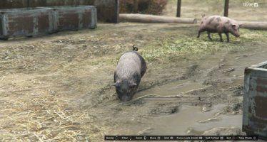 Свиньи GTA 5