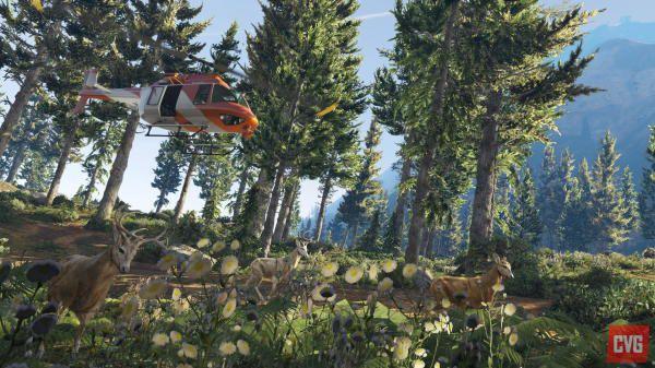 Лес GTA 5