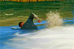 Быстрое плавание